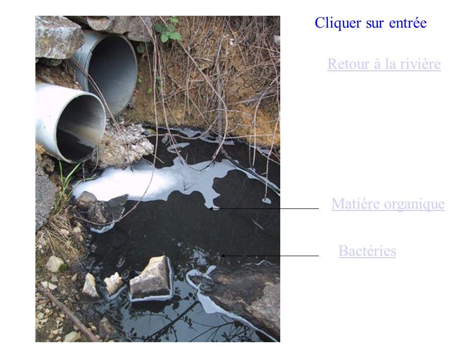 Matière organique Bactéries Retour à la rivière Cliquer sur entrée
