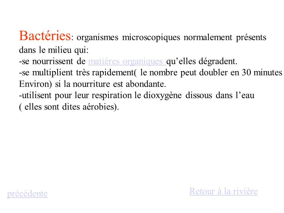 Bactéries : organismes microscopiques normalement présents dans le milieu qui: -se nourrissent de matières organiques quelles dégradent.matières organ