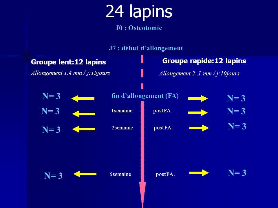 2semaine post FA. 1semaine post FA. 5semaine post FA. Allongement 1.4 mm / j:15jours N= 3 J0 : Ostéotomie J7 : début dallongement Allongement 2,1 mm /