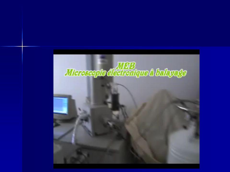 Technique dhistologie Bleu de toluidène Trichrome de Goldner Hématoxyline de Meyer