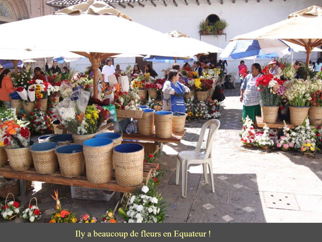 Ily a beaucoup de fleurs en Equateur !
