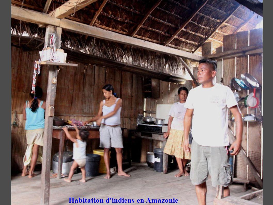 Habitation d indiens en Amazonie