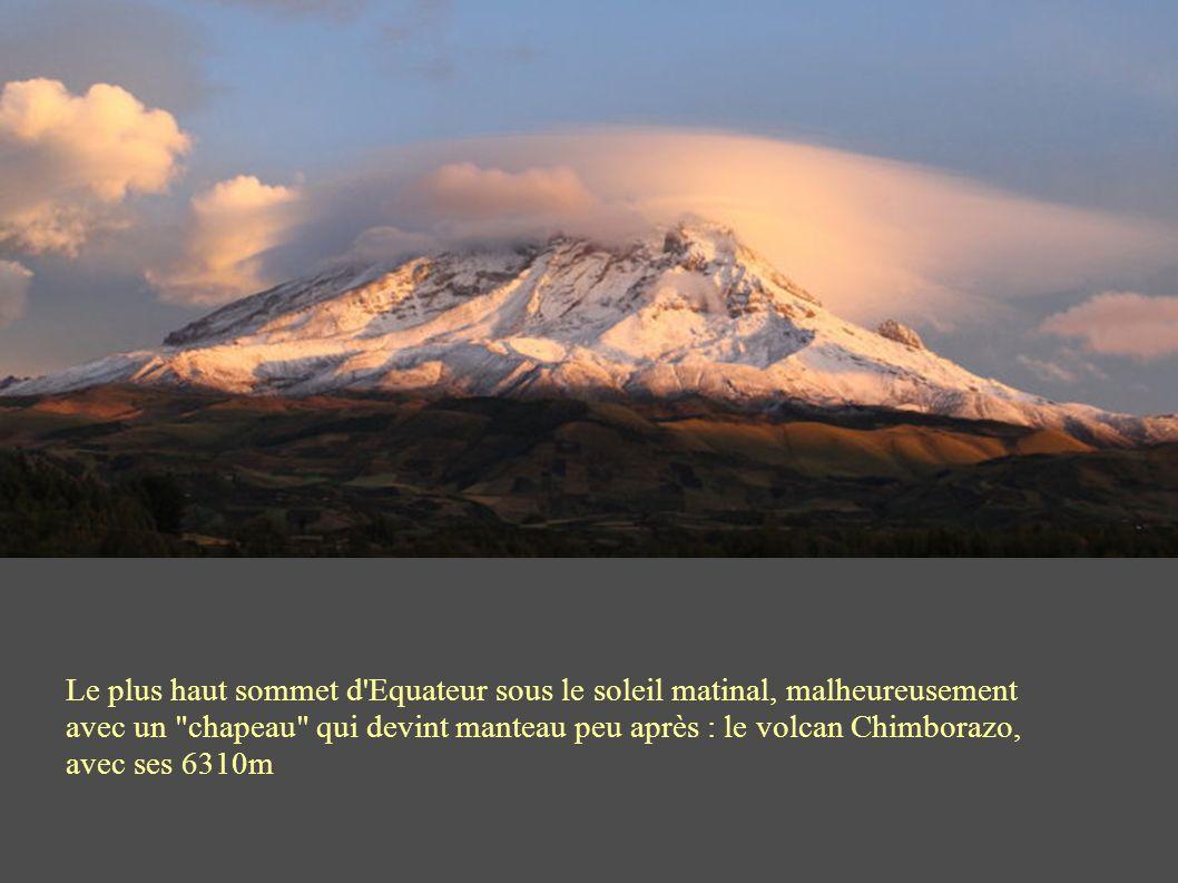 Le plus haut sommet d Equateur sous le soleil matinal, malheureusement avec un chapeau qui devint manteau peu après : le volcan Chimborazo, avec ses 6310m