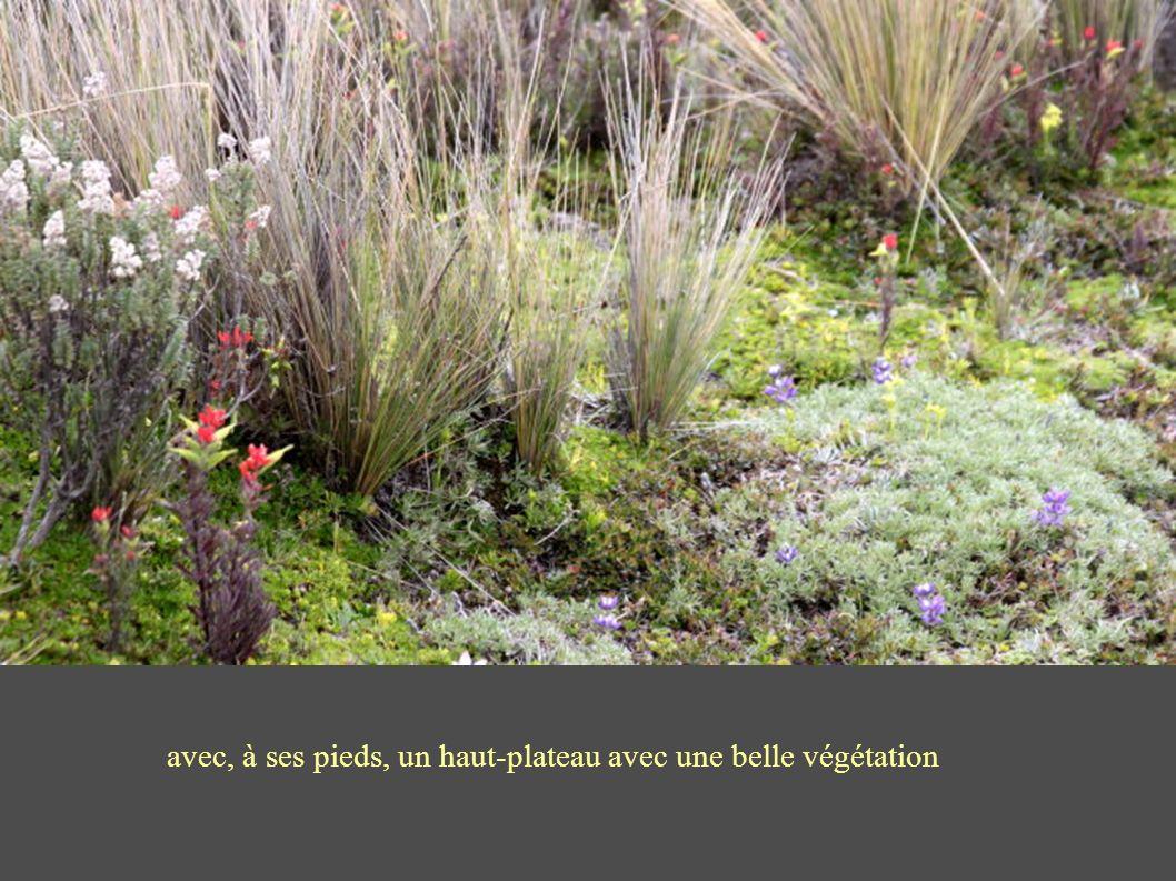 avec, à ses pieds, un haut-plateau avec une belle végétation