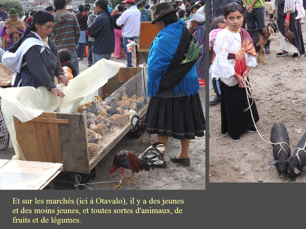 Et sur les marchés (ici à Otavalo), il y a des jeunes et des moins jeunes, et toutes sortes d animaux, de fruits et de légumes.