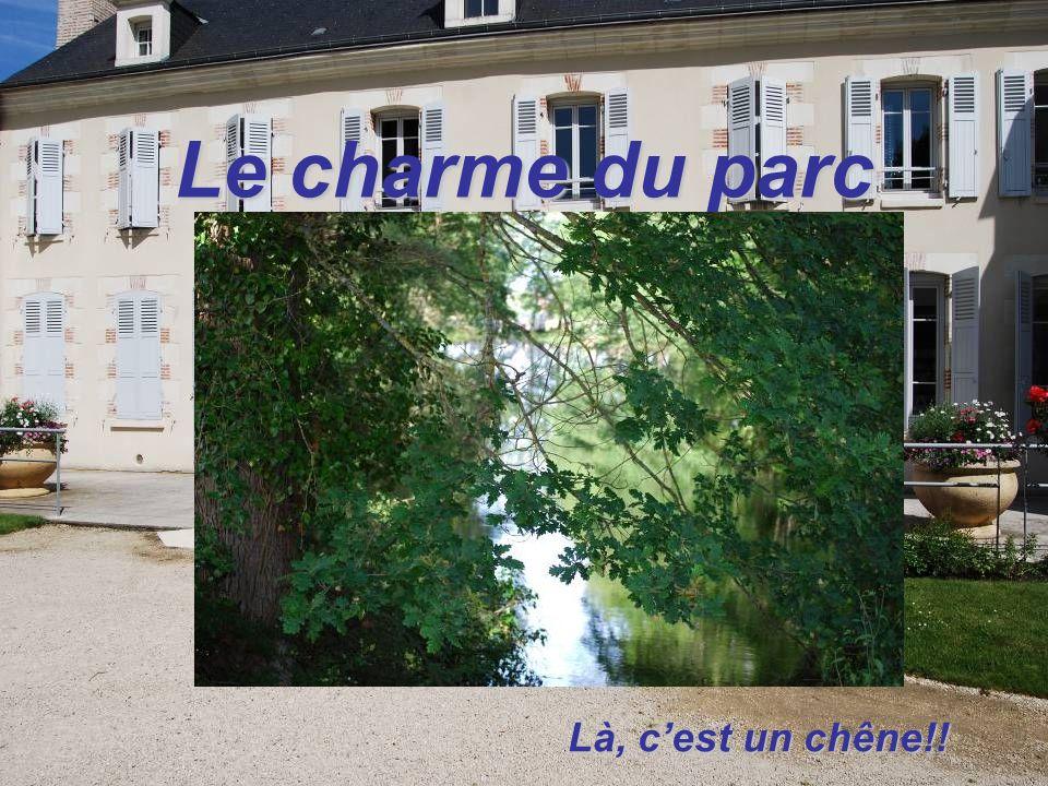 Le charme du parc Là, cest un chêne!!
