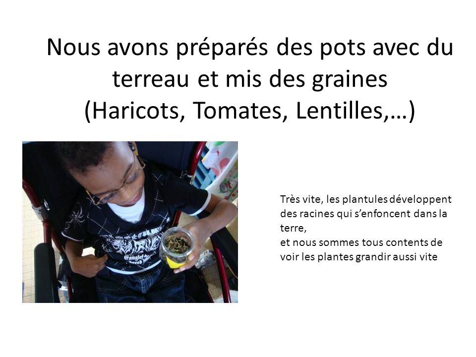 Nous avons préparés des pots avec du terreau et mis des graines (Haricots, Tomates, Lentilles,…) Très vite, les plantules développent des racines qui senfoncent dans la terre, et nous sommes tous contents de voir les plantes grandir aussi vite