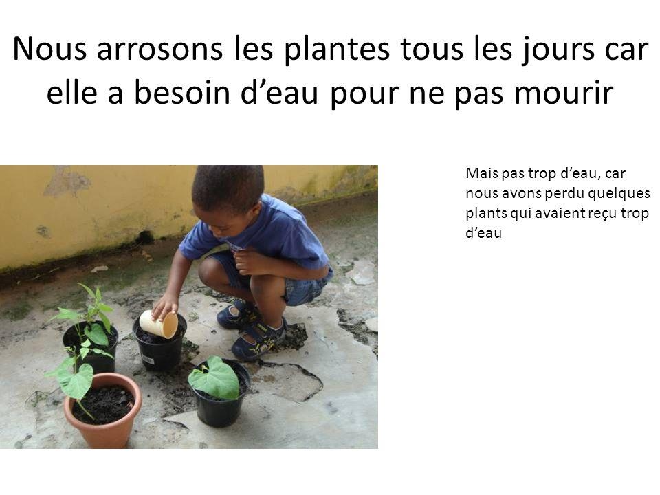 Nous arrosons les plantes tous les jours car elle a besoin deau pour ne pas mourir Mais pas trop deau, car nous avons perdu quelques plants qui avaient reçu trop deau