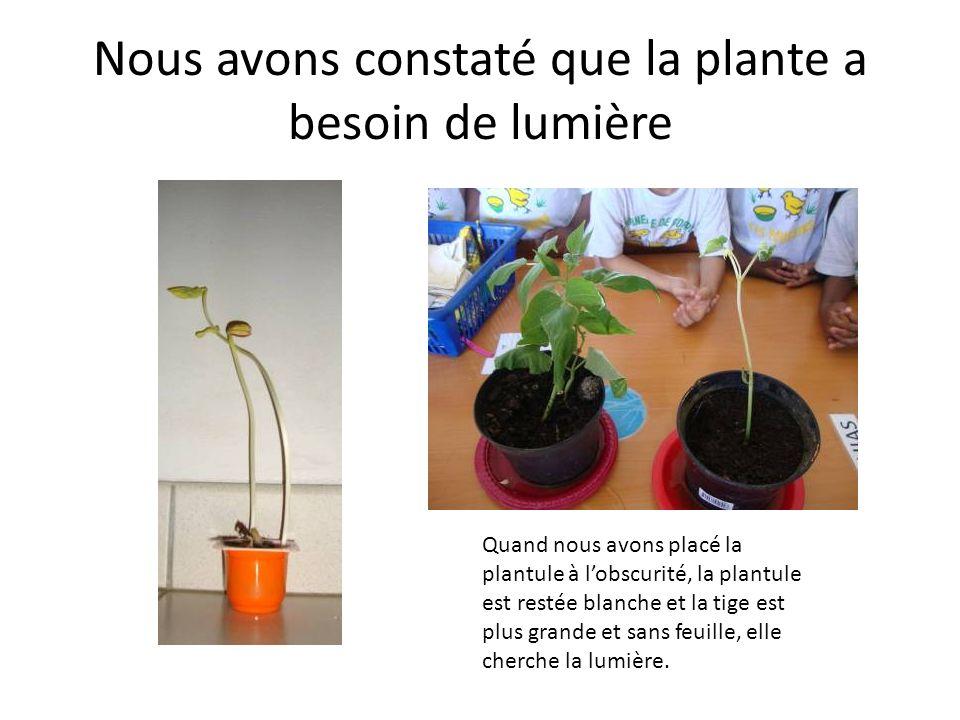 Nous avons constaté que la plante a besoin de lumière Quand nous avons placé la plantule à lobscurité, la plantule est restée blanche et la tige est plus grande et sans feuille, elle cherche la lumière.