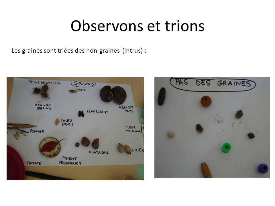 Observons et trions Les graines sont triées des non-graines (intrus) :