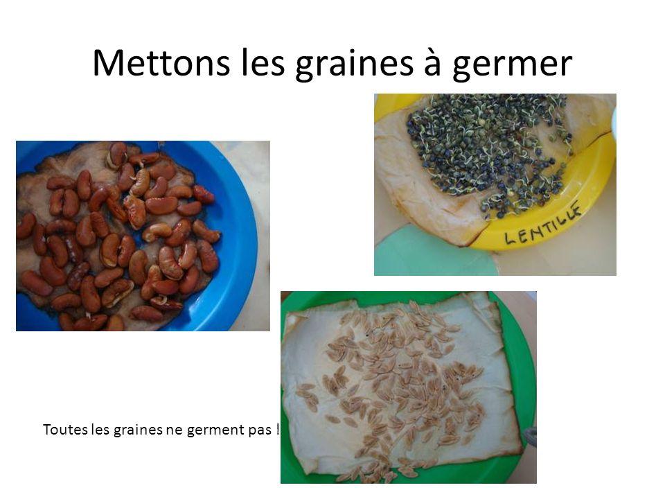 Mettons les graines à germer Toutes les graines ne germent pas !
