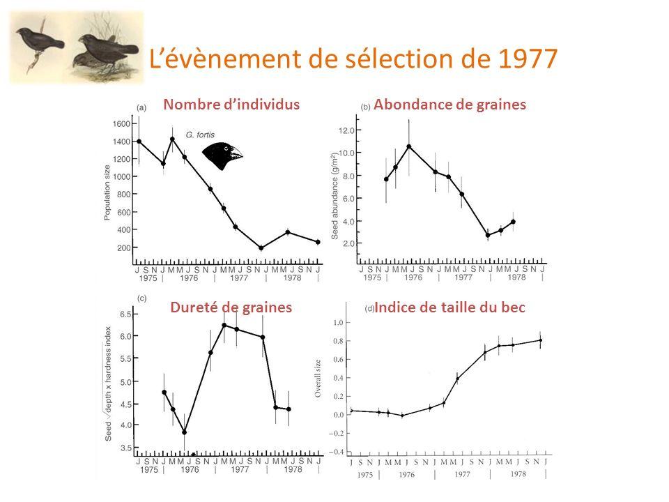 Lévènement de sélection de 1977 Nombre dindividusAbondance de graines Dureté de grainesIndice de taille du bec
