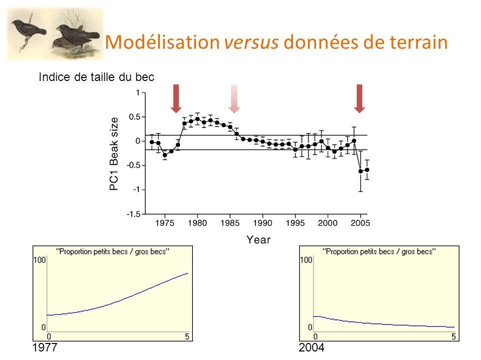 Modélisation versus données de terrain Indice de taille du bec 19772004