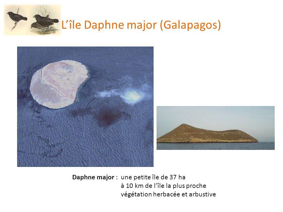 Daphne major : une petite île de 37 ha à 10 km de lîle la plus proche végétation herbacée et arbustive Lîle Daphne major (Galapagos)