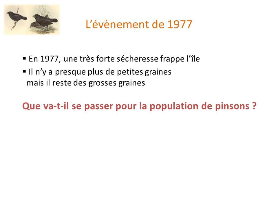 Lévènement de 1977 En 1977, une très forte sécheresse frappe lîle Il ny a presque plus de petites graines mais il reste des grosses graines Que va-t-il se passer pour la population de pinsons ?