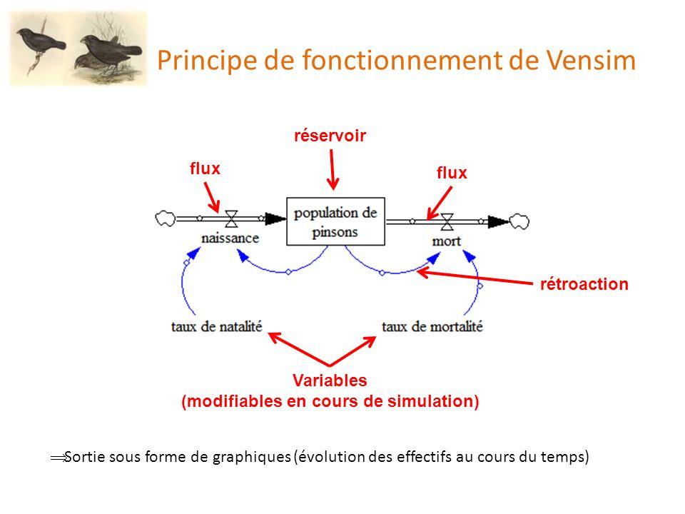 Critères de construction des modèles dévolution des Pinsons effectifs de départ correspondants à ceux comptés sur lîle durée de la simulation conforme à la durée de lévènement de sélection observée sur le terrain (5 trimestres) MAIS : conversion directe des graines en pinsons (1 graine devient 1 pinson) définition empirique des équations de production végétale : la production de petites graines est une fonction exponentielle de la quantité deau la production de grosses graines est une fonction linéaire de la quantité deau la quantité deau initiale est fixée à 100 ; sécheresse à 0 Il est important de noter quen raison de ces partis pris, les modèles ne sont pas strictement scientifiques, mais sont plutôt à voir comme des outils à visée pédagogique.