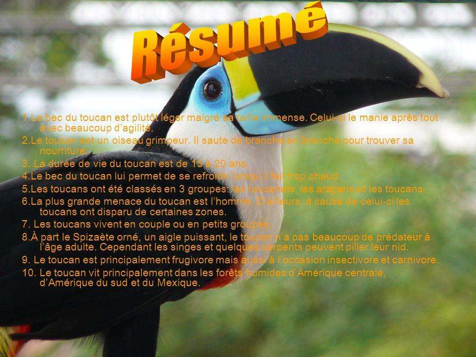 1.Le bec du toucan est plutôt léger malgré sa taille immense. Celui-ci le manie après tout avec beaucoup dagilité. 2.Le toucan est un oiseau grimpeur.