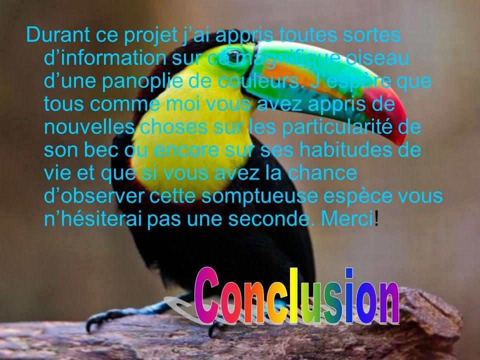 Durant ce projet jai appris toutes sortes dinformation sur ce magnifique oiseau dune panoplie de couleurs. Jespère que tous comme moi vous avez appris