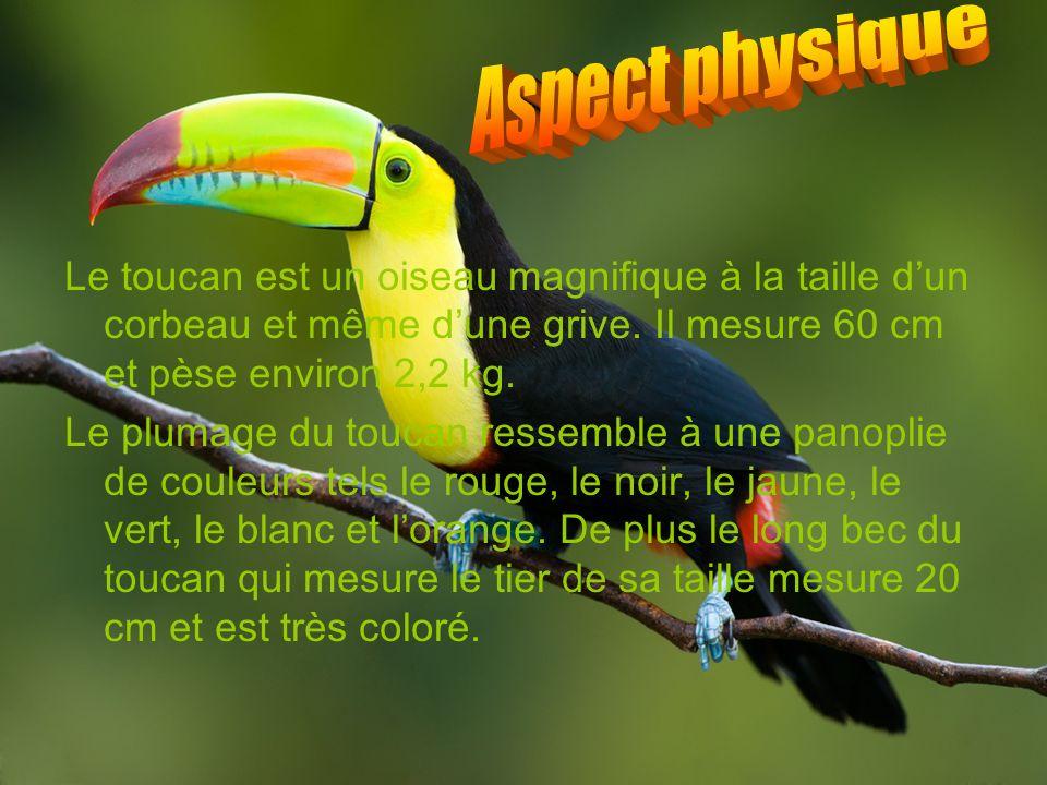 Le toucan est un oiseau magnifique à la taille dun corbeau et même dune grive. Il mesure 60 cm et pèse environ 2,2 kg. Le plumage du toucan ressemble