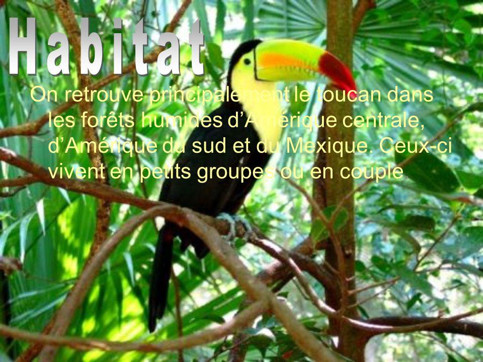 On retrouve principalement le toucan dans les forêts humides dAmérique centrale, dAmérique du sud et du Mexique. Ceux-ci vivent en petits groupes ou e