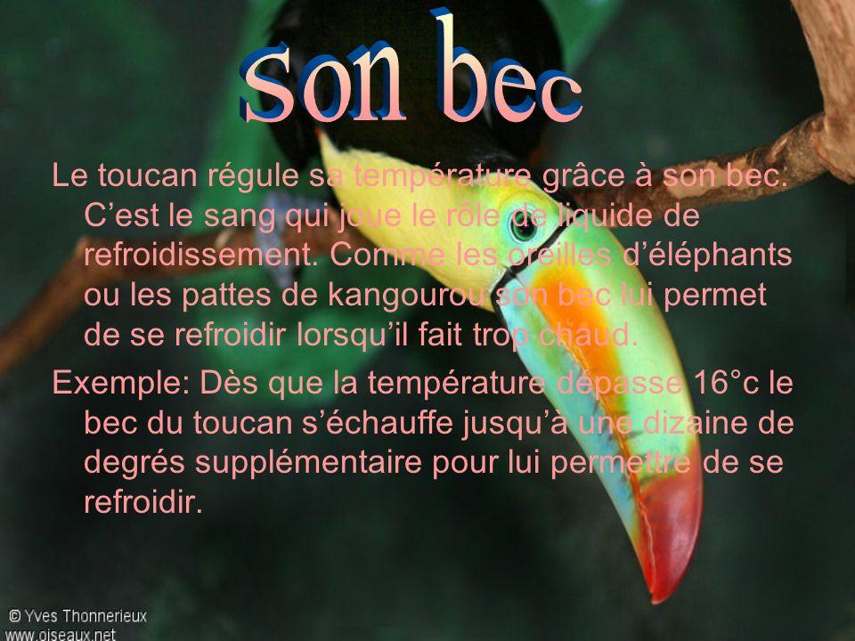 Le toucan régule sa température grâce à son bec. Cest le sang qui joue le rôle de liquide de refroidissement. Comme les oreilles déléphants ou les pat