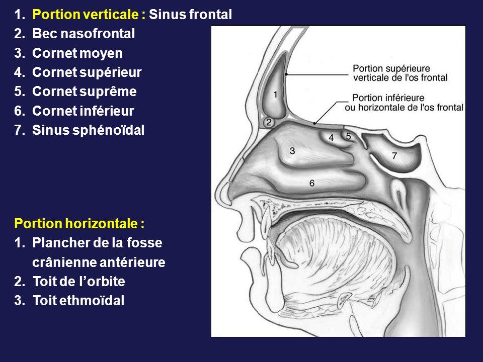 1.Portion verticale : Sinus frontal 2.Bec nasofrontal 3.Cornet moyen 4.Cornet supérieur 5.Cornet suprême 6.Cornet inférieur 7.Sinus sphénoïdal Portion horizontale : 1.Plancher de la fosse crânienne antérieure 2.Toit de lorbite 3.Toit ethmoïdal