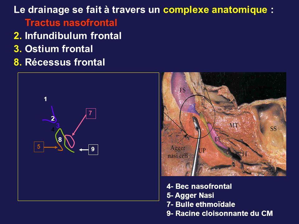 Le drainage se fait à travers un complexe anatomique : Tractus nasofrontal 2.Infundibulum frontal 3.Ostium frontal 8.Récessus frontal 1 2 3 8 4 9 7 5 4- Bec nasofrontal 5- Agger Nasi 7- Bulle ethmoïdale 9- Racine cloisonnante du CM