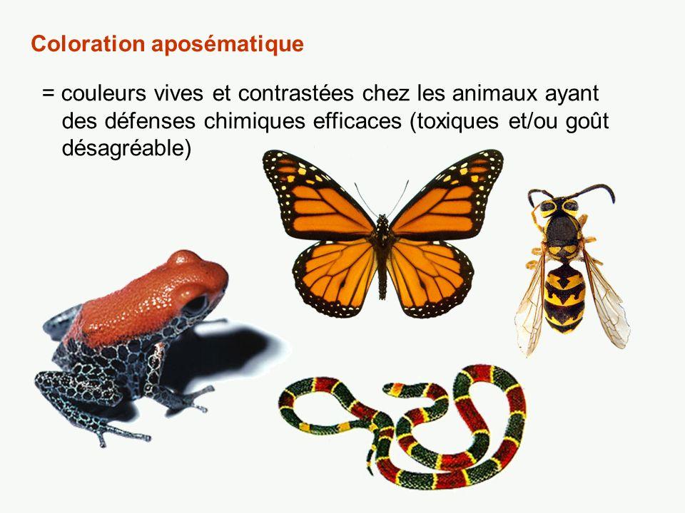 Mimétisme müllérien Au cours de lévolution, des espèces dotées de défenses chimiques efficaces en viennent à adopter des couleurs et motifs semblables.