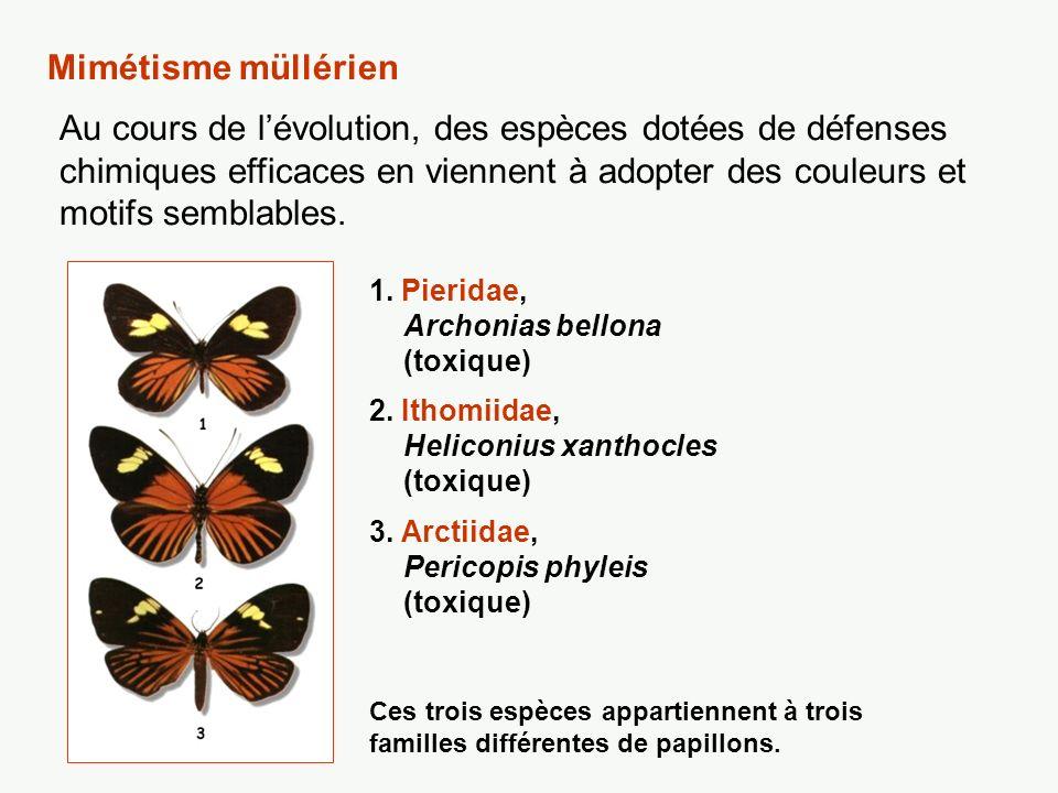 Mimétisme müllérien Au cours de lévolution, des espèces dotées de défenses chimiques efficaces en viennent à adopter des couleurs et motifs semblables
