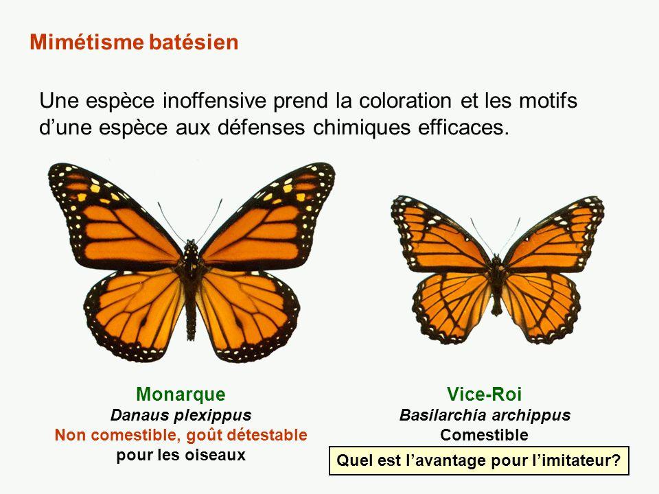 O.Hyménoptères Guêpe Toxique O. Lépidoptères Papillon Sésie Comestible O.