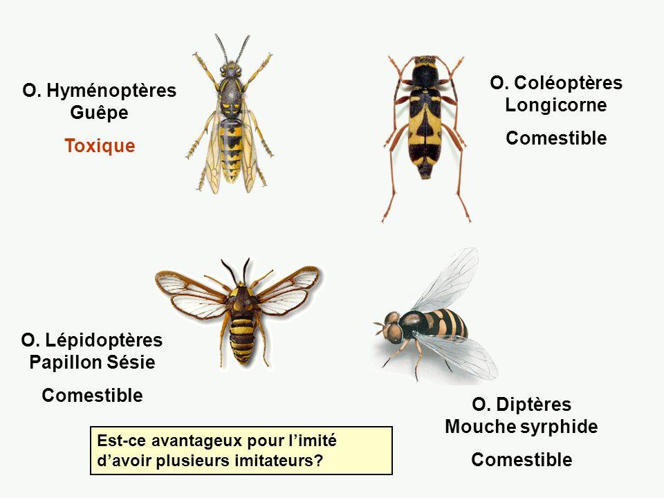 1.Pieridae, Dismorphia orise 2. Ithomiidae, Metona confusa [toxique] 3.