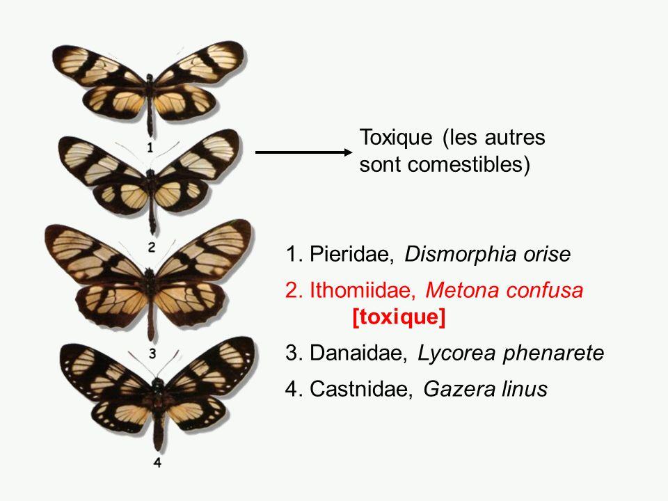 Lampropeltis doliata (non vénéneux) Micrurus fulvius (vénéneux) Si le jaune touche le rouge, rien ne bouge.