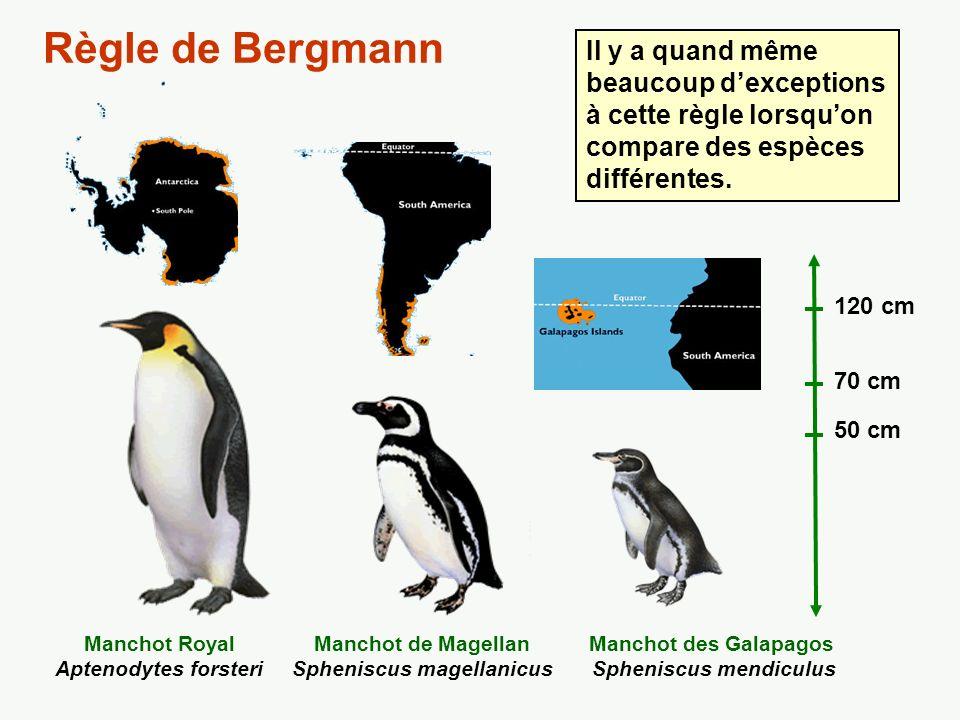 Variation de la taille moyenne (mm) du Pic mineur (Picoides pubescens) Règle de Bergmann La règle se vérifie souvent à lintérieur dune même espèce