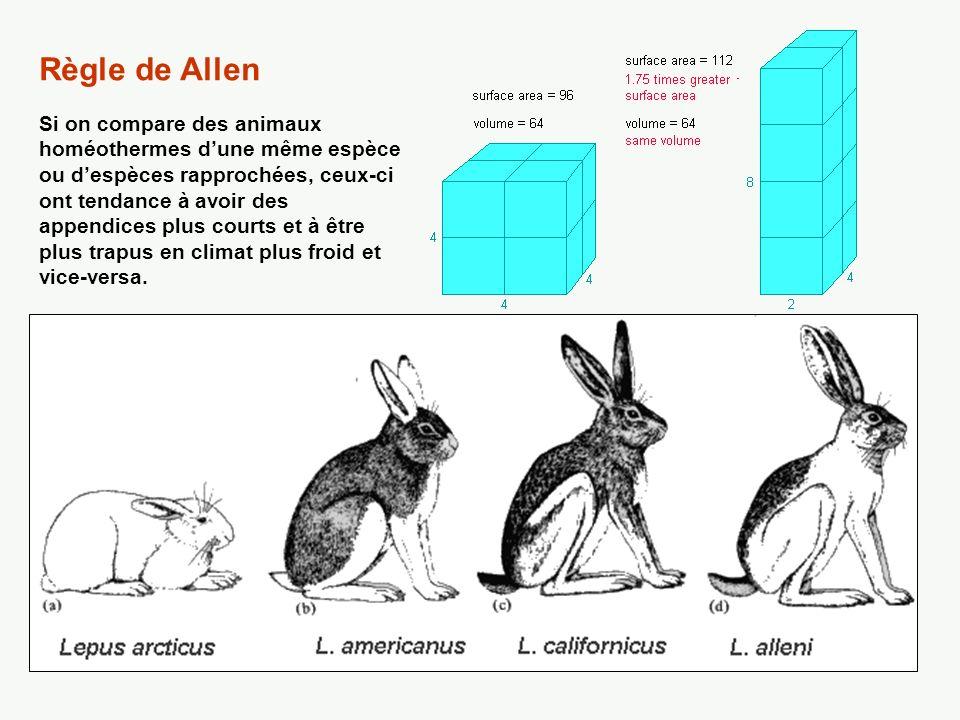 Renard arctique Renard roux Fennec (renard du désert du Sahara) Règle de Allen