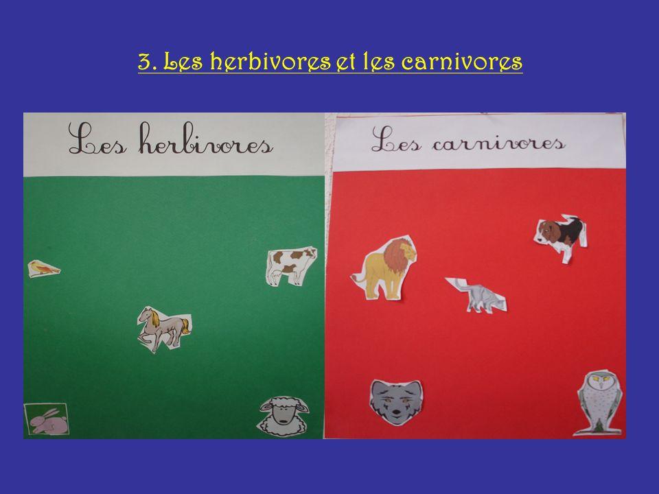 3. Les herbivores et les carnivores