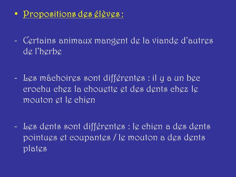 Propositions des élèves : -Certains animaux mangent de la viande dautres de lherbe -Les mâchoires sont différentes : il y a un bec crochu chez la chou