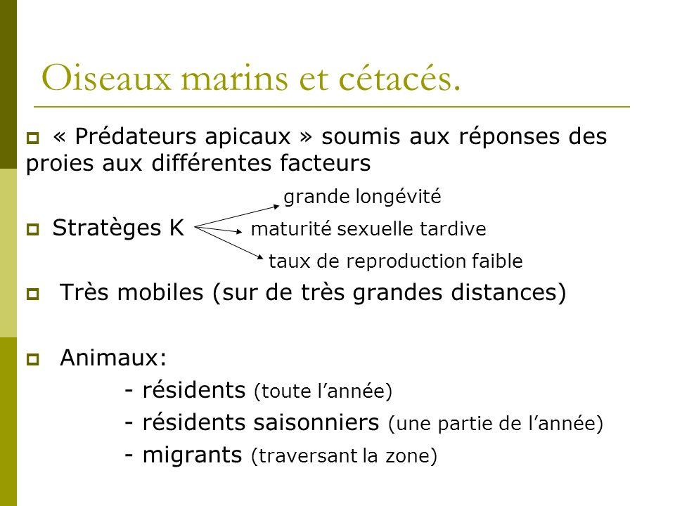 Association Thon Dauphins « a long bec » et « bleu et blanc » Oiseaux marins