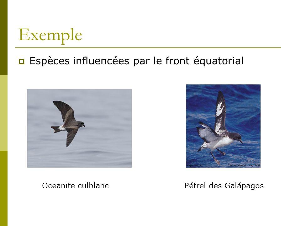 Exemple Espèces influencées par le front équatorial Oceanite culblancPétrel des Galápagos