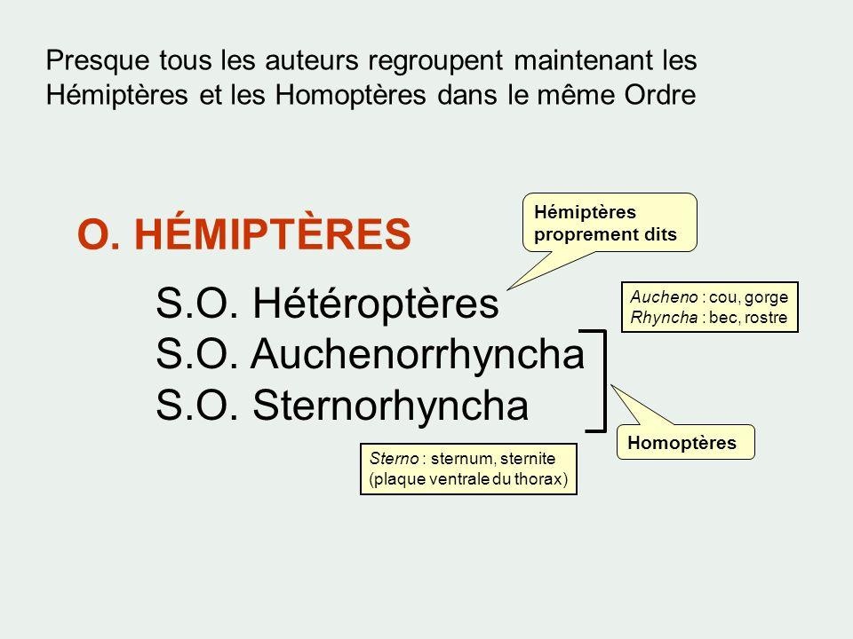 Presque tous les auteurs regroupent maintenant les Hémiptères et les Homoptères dans le même Ordre O. HÉMIPTÈRES S.O. Hétéroptères S.O. Auchenorrhynch