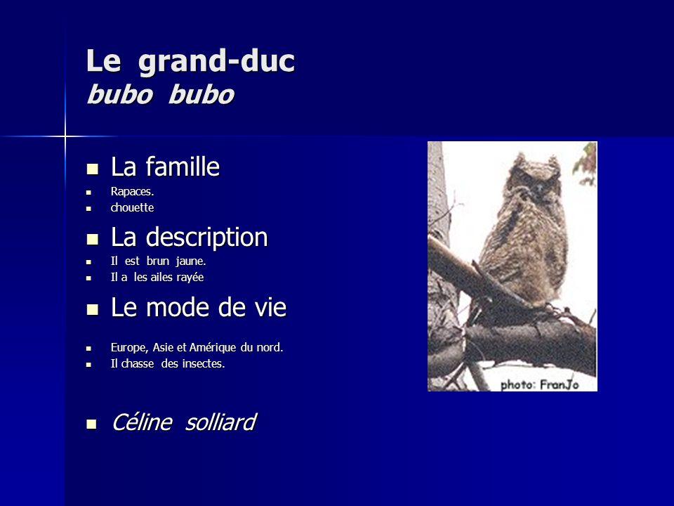 Le grand-duc bubo bubo La famille La famille Rapaces.