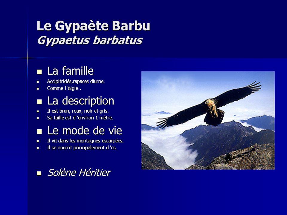 Le Gypaète Barbu Gypaetus barbatus La famille La famille Accipitridés,rapaces diurne.