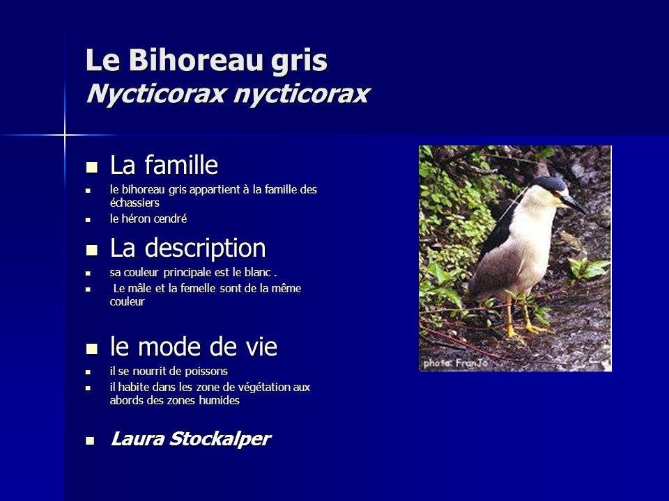 Corneille noire corvus c.
