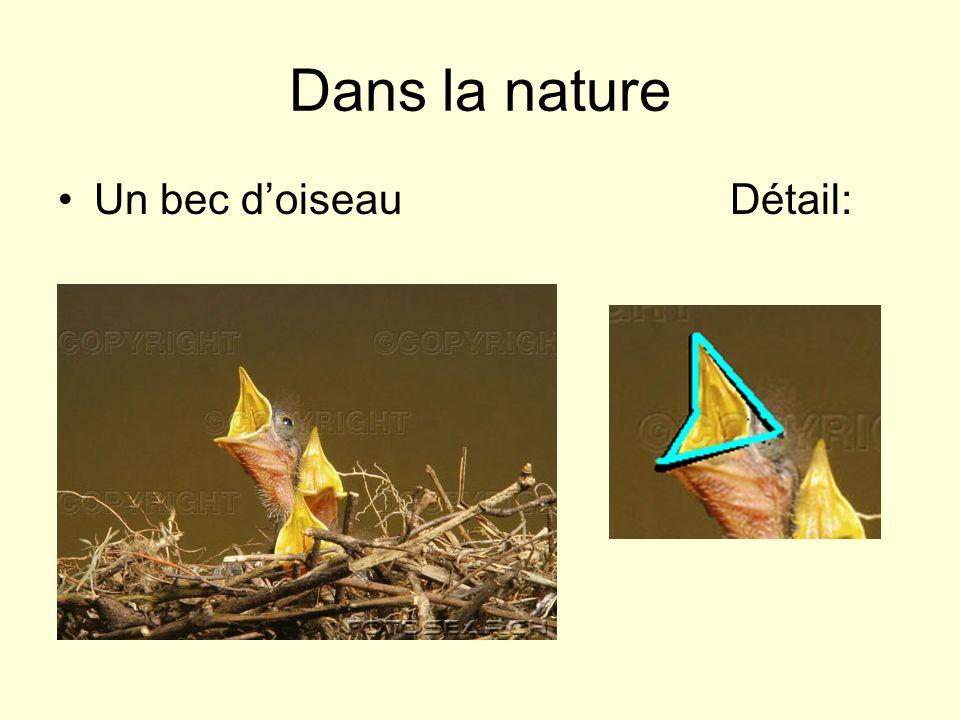 Dans la nature Un bec doiseauDétail: