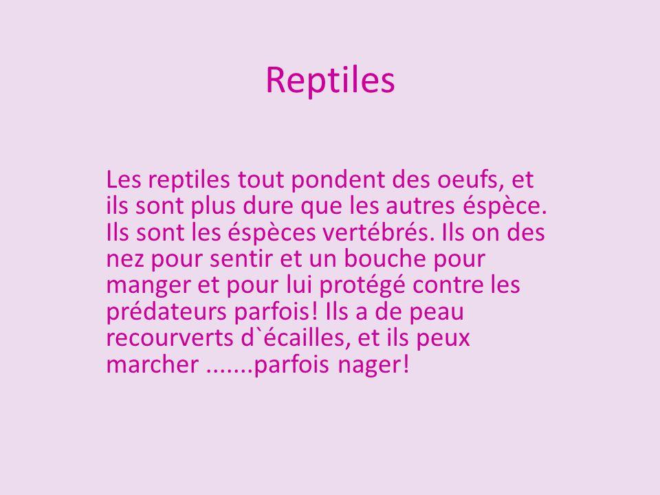 Les reptiles tout pondent des oeufs, et ils sont plus dure que les autres éspèce. Ils sont les éspèces vertébrés. Ils on des nez pour sentir et un bou