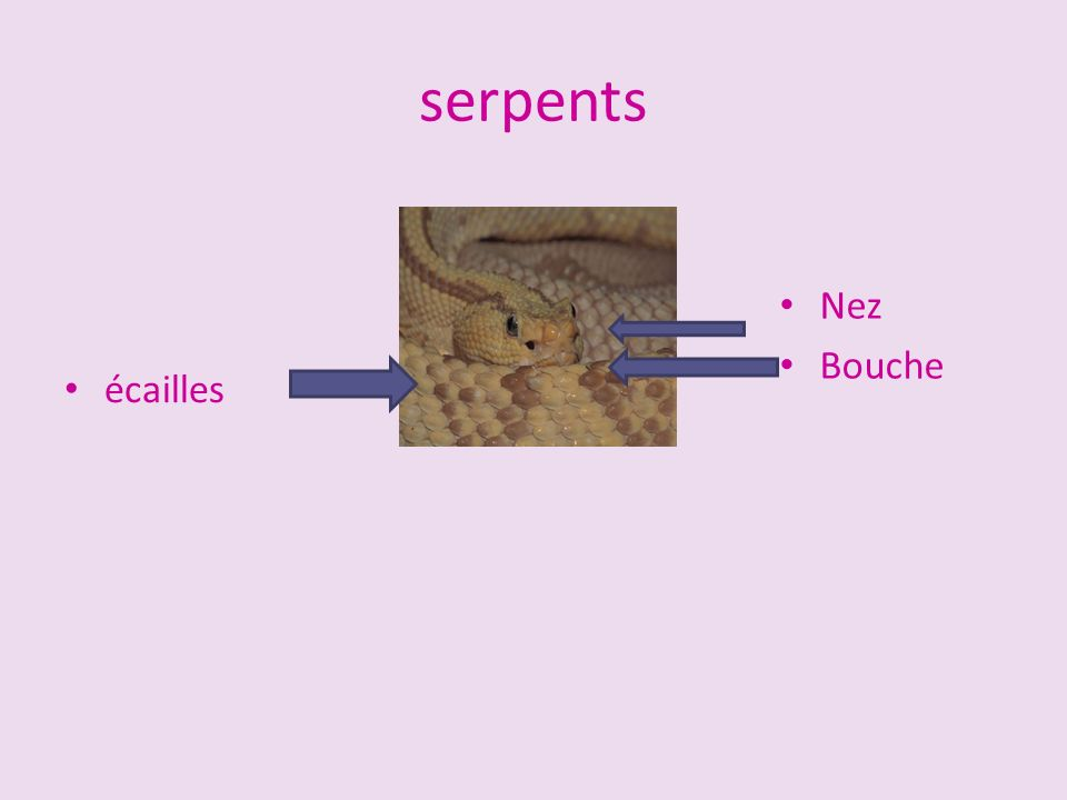 Amphibiens Touts les amphibiens ont la sang froids, et beaucoup des amphibiens vit proche d`eau.