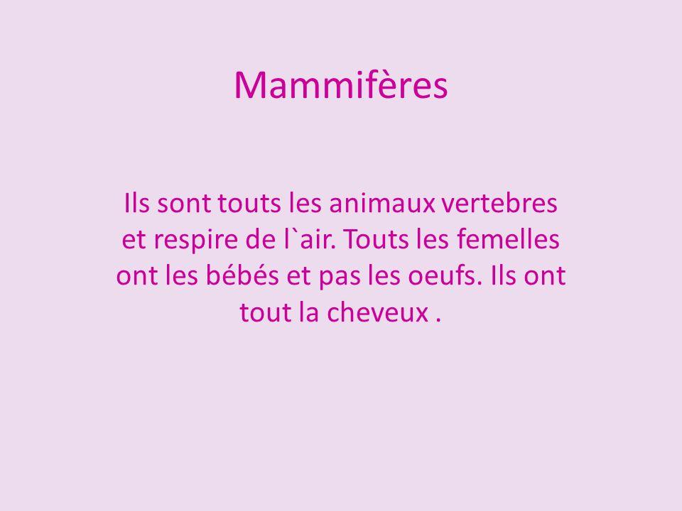 Mammifères Ils sont touts les animaux vertebres et respire de l`air. Touts les femelles ont les bébés et pas les oeufs. Ils ont tout la cheveux.