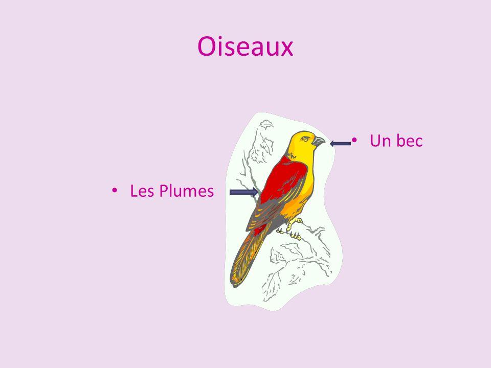 Oiseaux Un bec Les Plumes