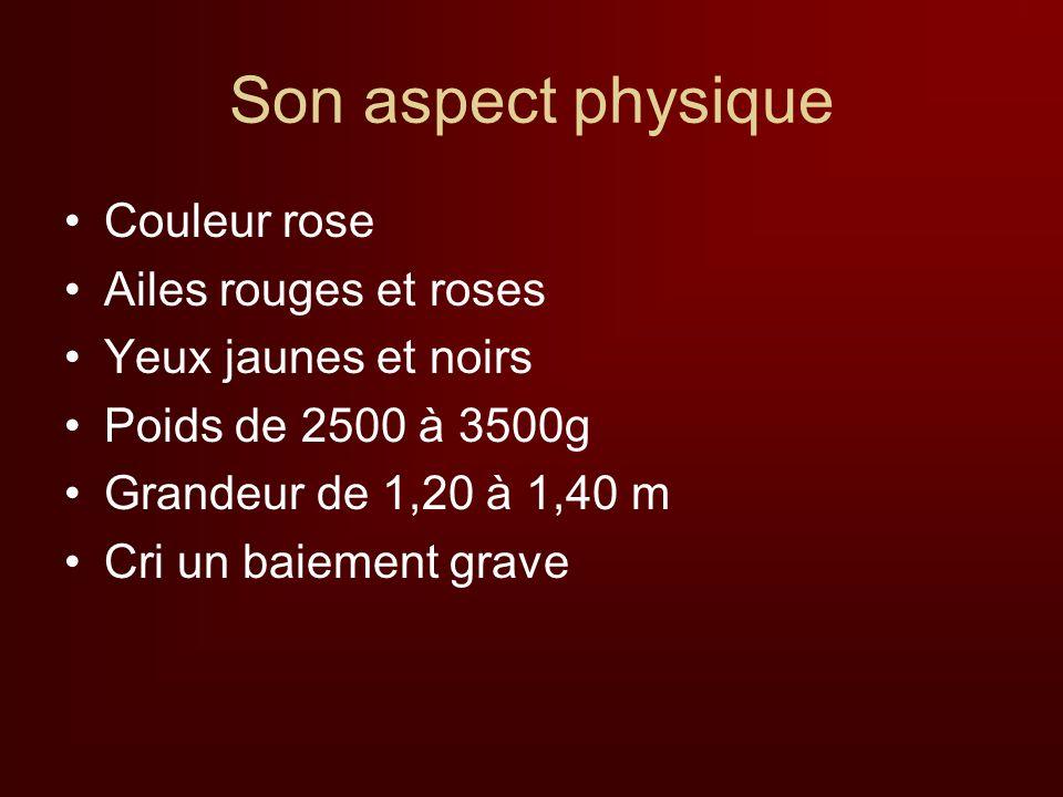 Son aspect physique Couleur rose Ailes rouges et roses Yeux jaunes et noirs Poids de 2500 à 3500g Grandeur de 1,20 à 1,40 m Cri un baiement grave