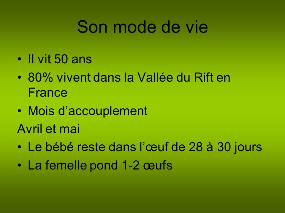 Son mode de vie Il vit 50 ans 80% vivent dans la Vallée du Rift en France Mois daccouplement Avril et mai Le bébé reste dans lœuf de 28 à 30 jours La femelle pond 1-2 œufs