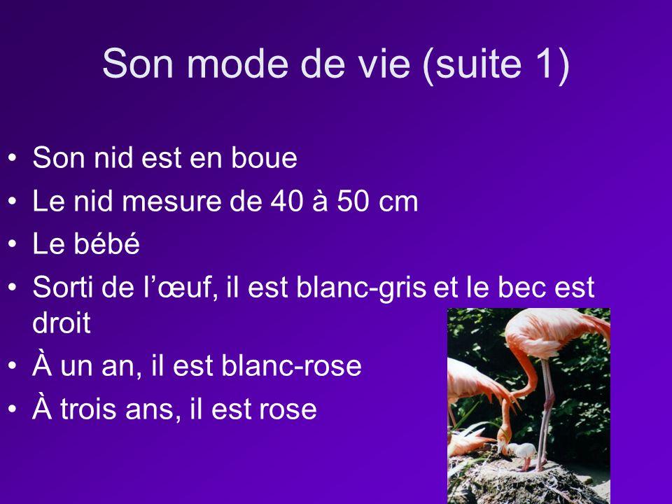 Son mode de vie (suite 1) Son nid est en boue Le nid mesure de 40 à 50 cm Le bébé Sorti de lœuf, il est blanc-gris et le bec est droit À un an, il est blanc-rose À trois ans, il est rose